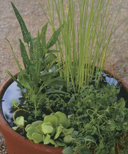 biljke voda2
