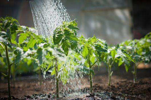 sačuvate vrt