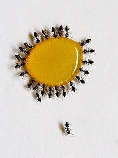 kako da oterate mrave