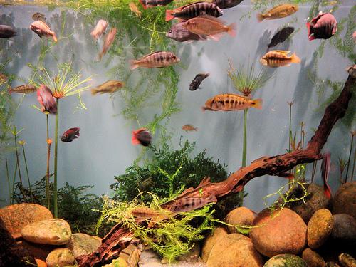 očistite akvarijum