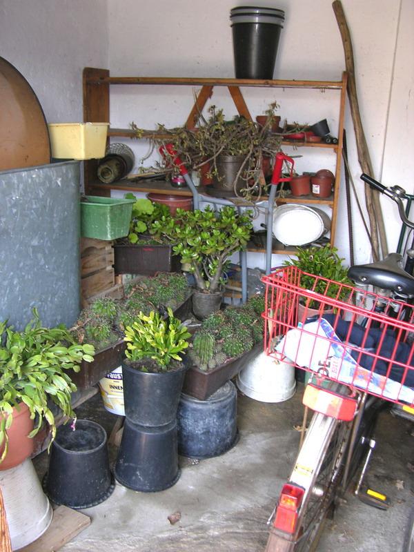 biljkama zimi