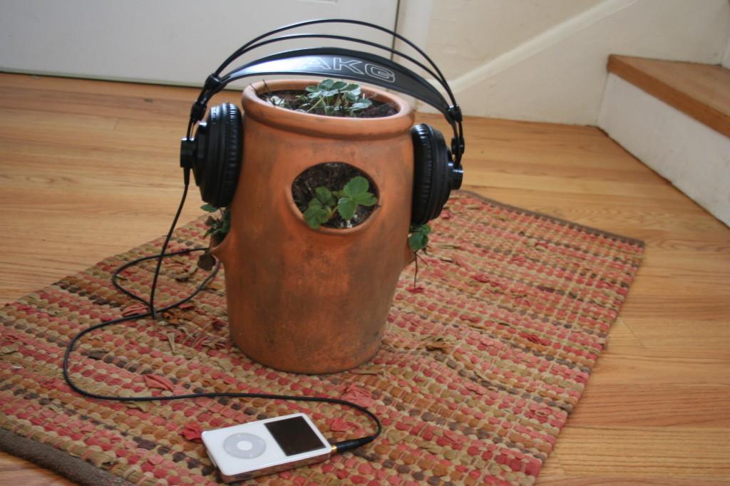 biljke muzika 2