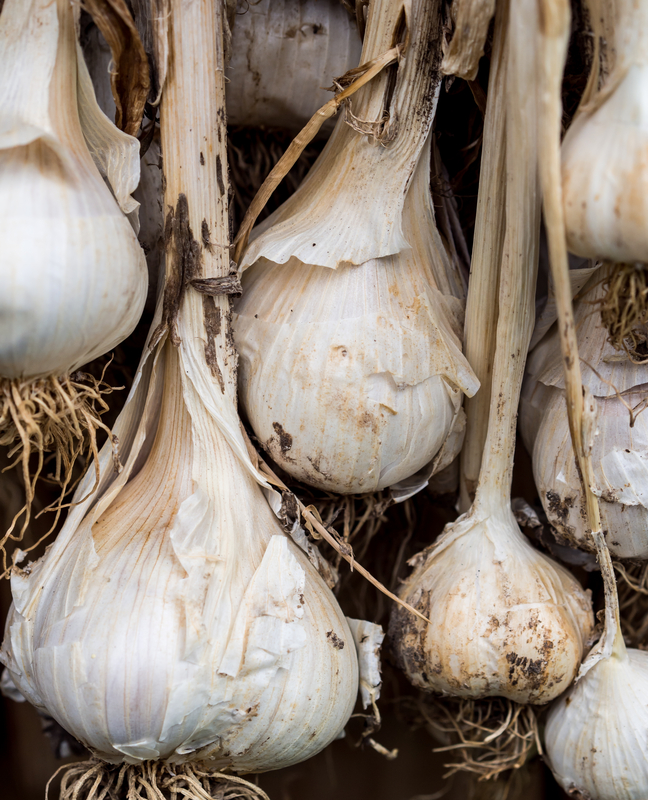 http://www.dreamstime.com/stock-photos-garlic-bulbs-drying-image26149863