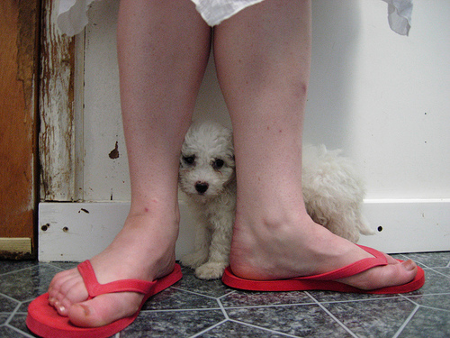 mali beli pas