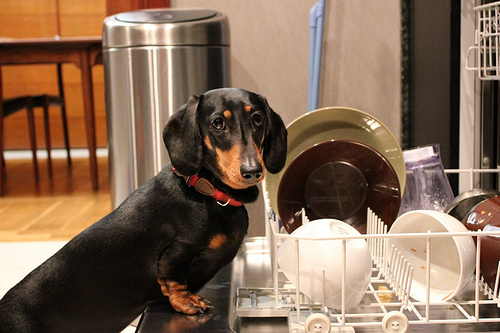 dogs in the dishwasher