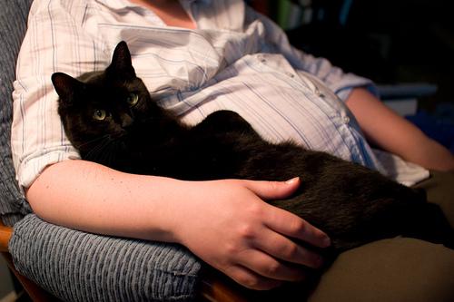 trudnica i crna macka u krilu