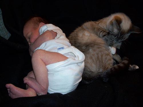 beba i macka spavaju