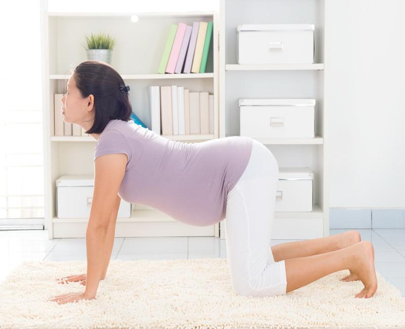 joga u trudnoci macka poza