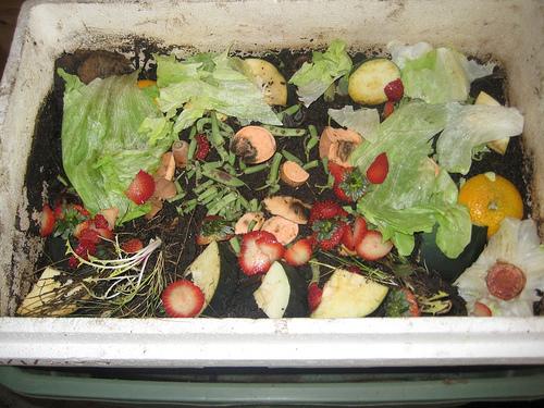 kompost gliste 5