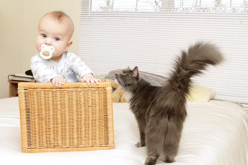 macka gleda u bebu