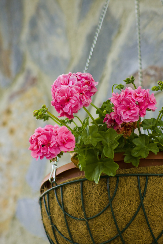http://www.dreamstime.com/stock-photography-flower-pot-image9538082
