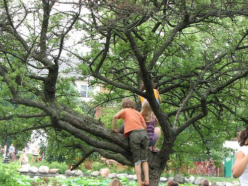 deca se penju na drvo