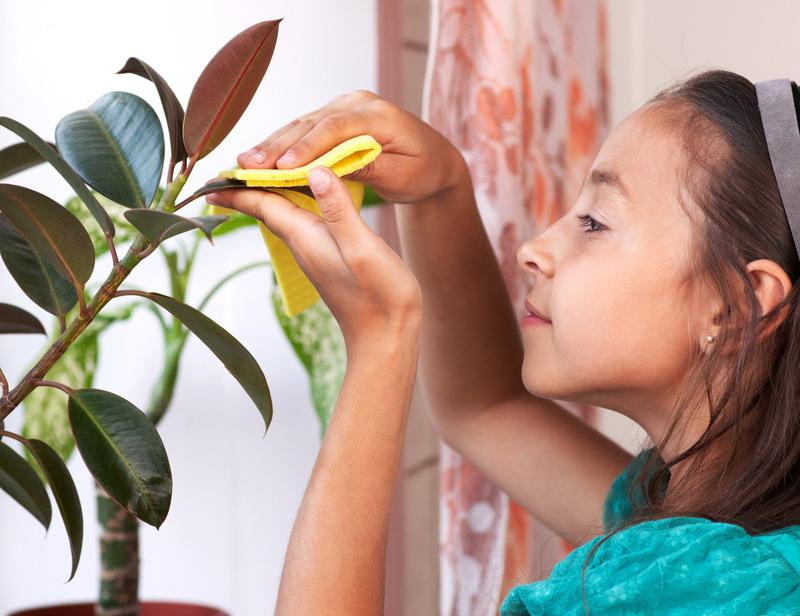 devojcica brise listove sa biljke