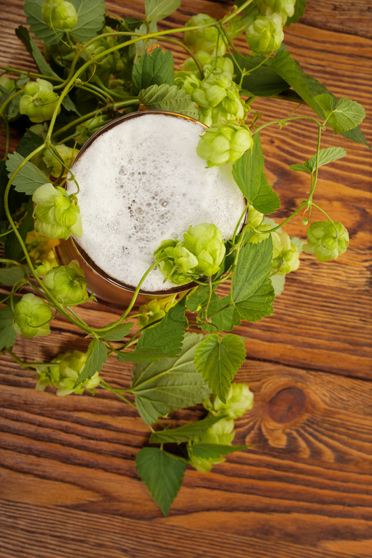 http://www.dreamstime.com/royalty-free-stock-image-pint-hop-plant-image28701296