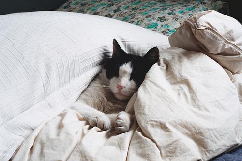 krevet ciscenje macka