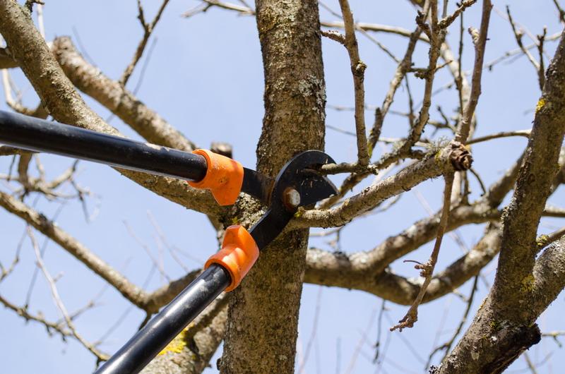 obrezivanje drveta u prolece