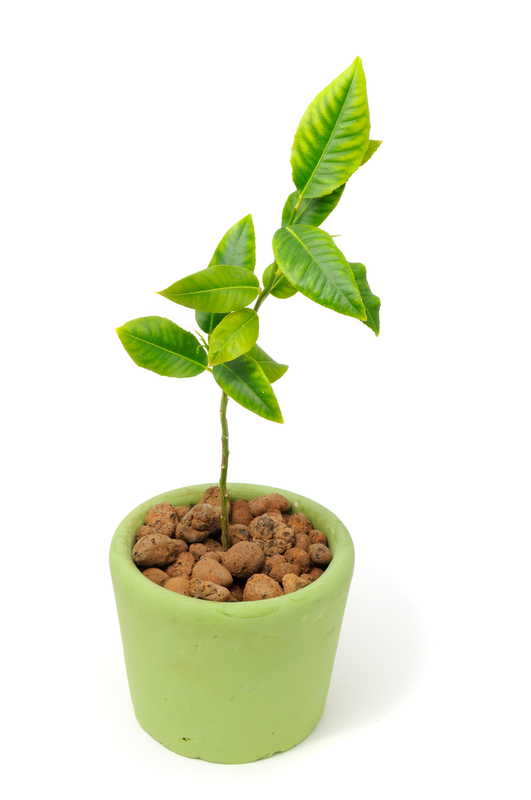 http://www.dreamstime.com/stock-images-little-lemon-tree-pot-image18829444