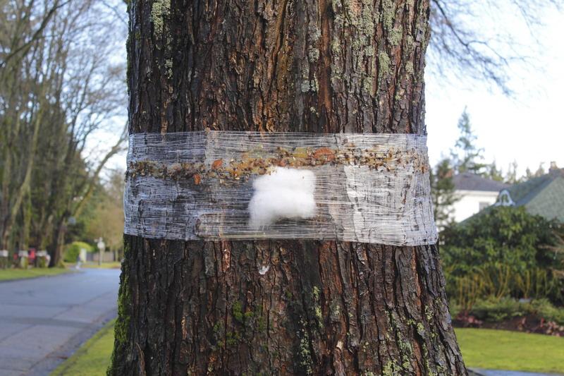stablo zastita
