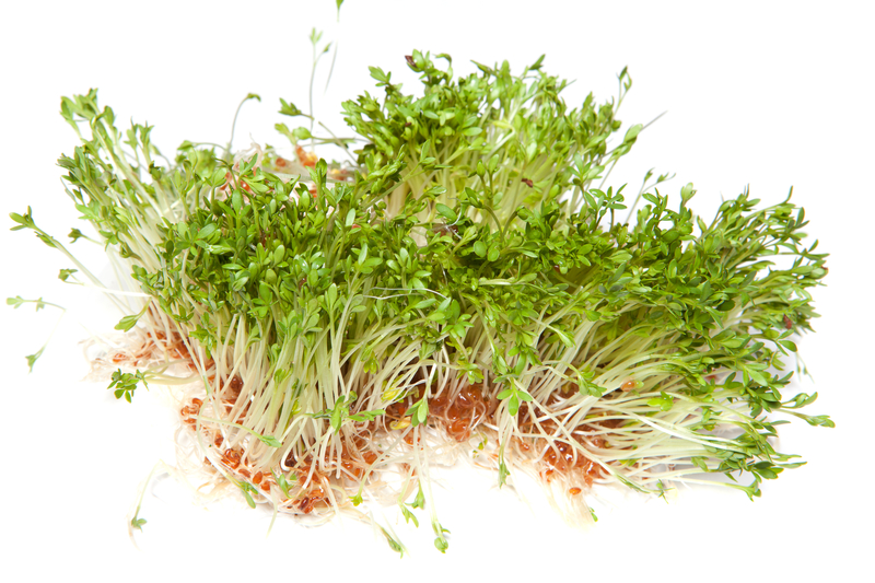 http://www.dreamstime.com/royalty-free-stock-photography-healthy-sprouts-image19492877