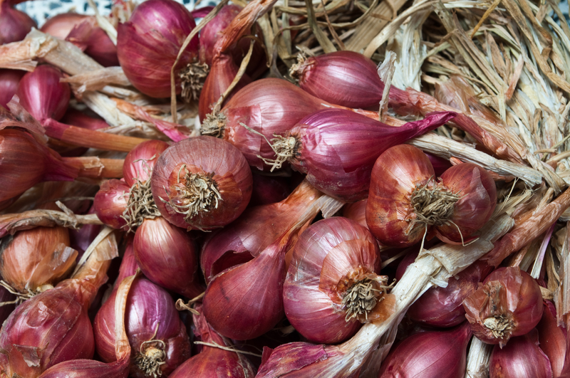 http://www.dreamstime.com/royalty-free-stock-image-shallots-image15351496