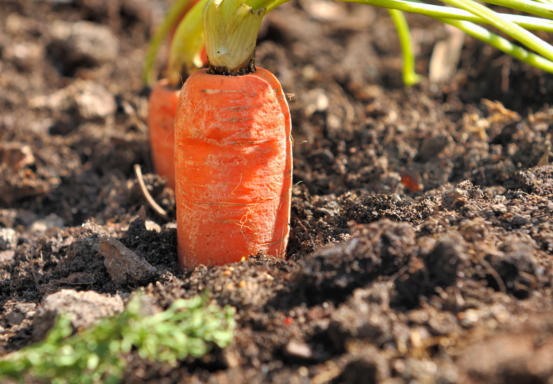 http://www.dreamstime.com/royalty-free-stock-photo-closeup-ripe-carrot-vegetable-garden-soil-image30192995