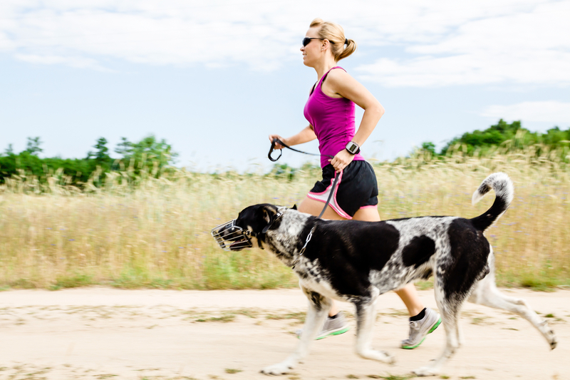 http://www.dreamstime.com/stock-image-woman-runner-running-walking-dog-summer-nature-image27795631