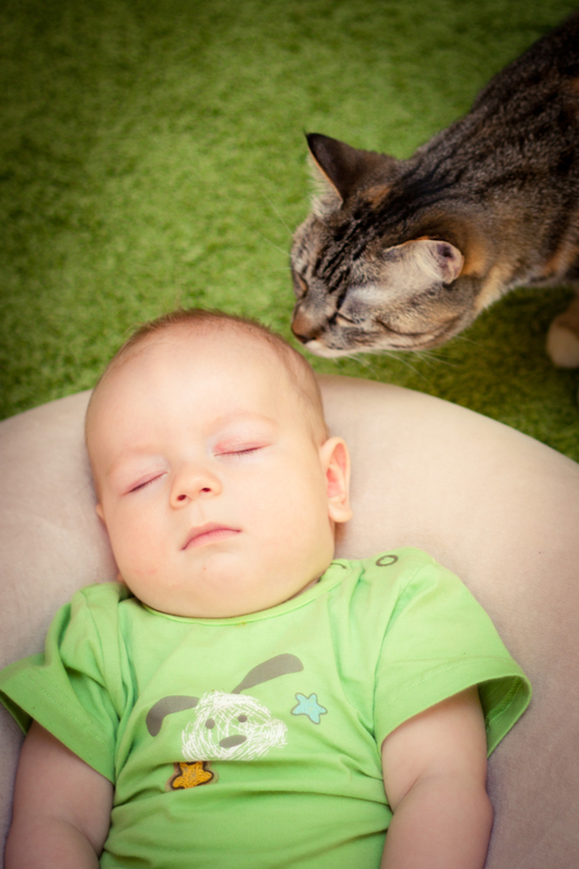 http://www.dreamstime.com/royalty-free-stock-photos-baby-cat-image20994488