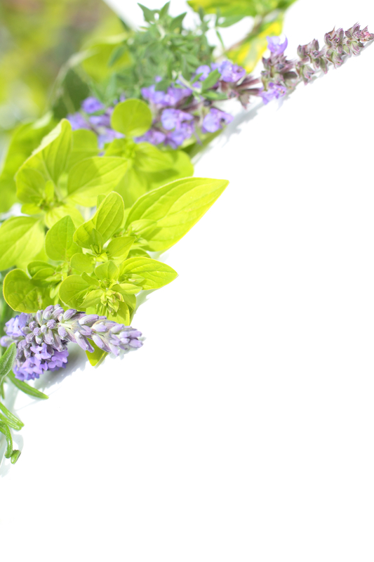 http://www.dreamstime.com/royalty-free-stock-images-collection-garden-herbs-image20557849