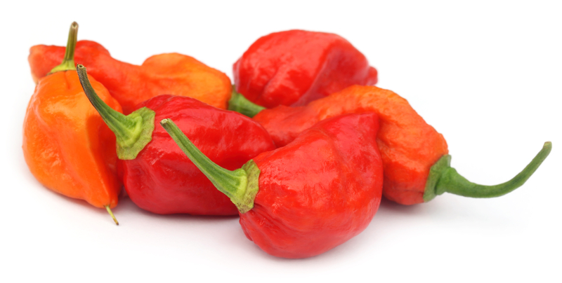 http://www.dreamstime.com/stock-photography-naga-chili-cilies-bangladesh-over-white-background-image34040662