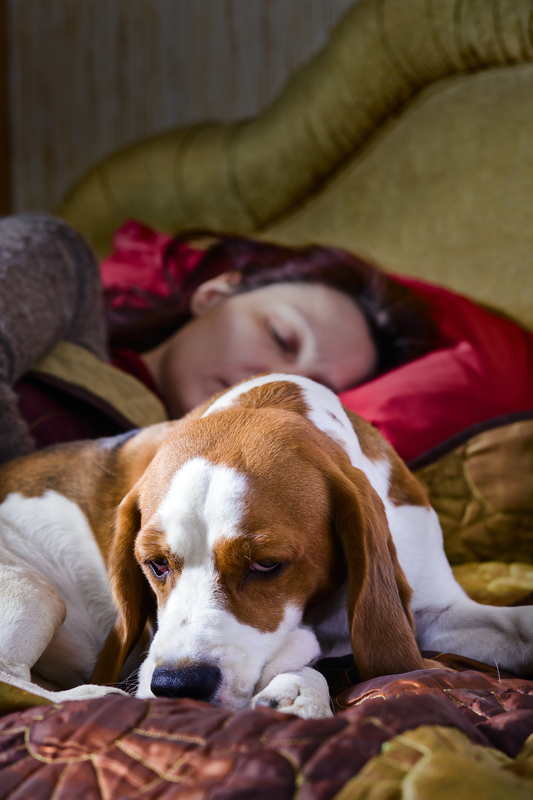 http://www.dreamstime.com/royalty-free-stock-photos-sleeping-woman-its-dog-bedroom-image33340558