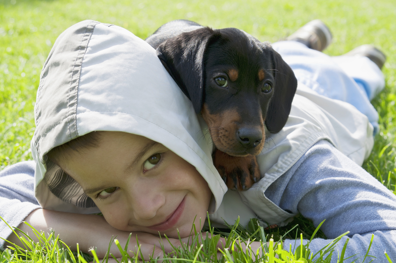 http://www.dreamstime.com/stock-photography-kid-dachshund-puppy-small-black-young-boy-green-garden-image40862392