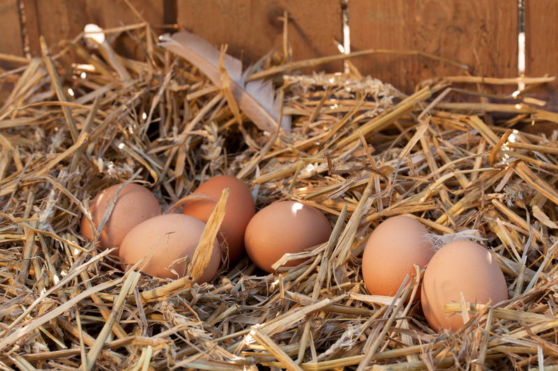 http://www.dreamstime.com/royalty-free-stock-images-organic-eggs-image37977449