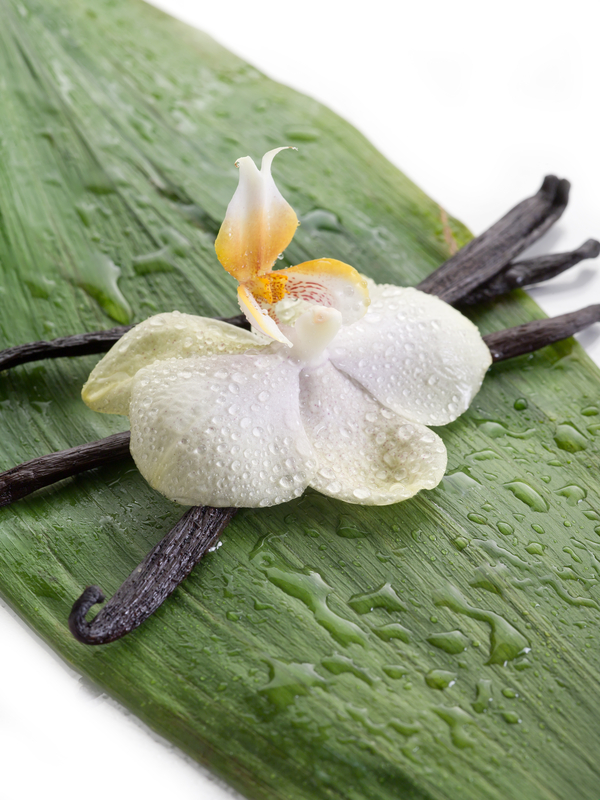 http://www.dreamstime.com/stock-photo-vanilla-stick-orchid-image19781260