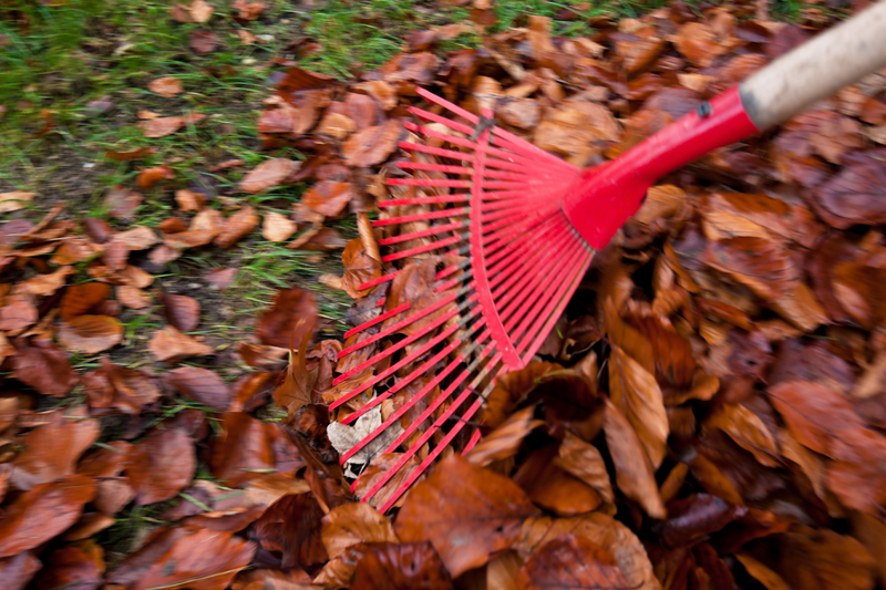 http://www.dreamstime.com/stock-photography-raking-leaves-remove-leaves-gardening-image29387002