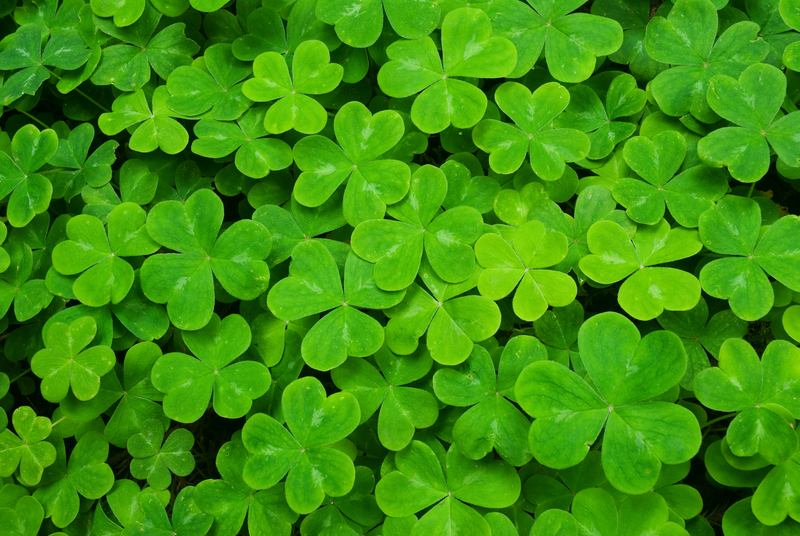 http://www.dreamstime.com/stock-photography-carpet-clover-image5851722
