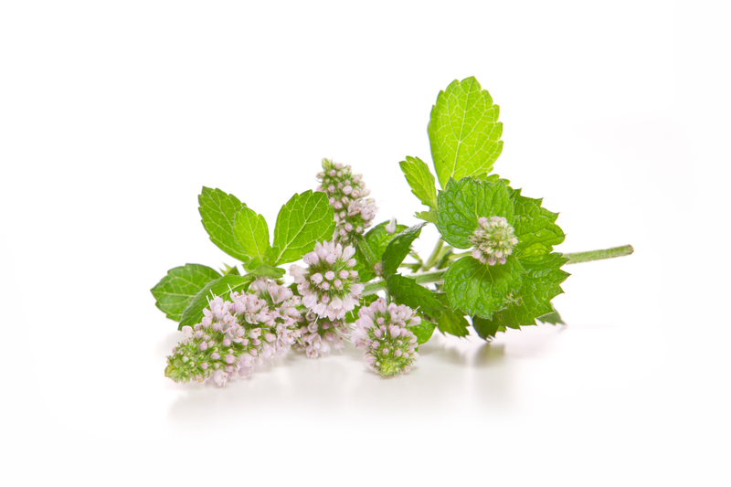 http://www.dreamstime.com/stock-photo-peppermint-plant-isolated-white-background-image34320070