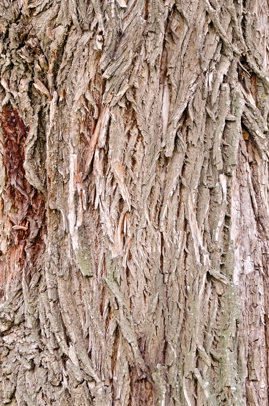 http://www.dreamstime.com/royalty-free-stock-image-bark-old-willow-texture-image34827356