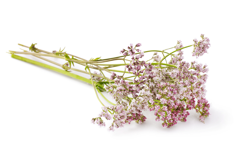 http://www.dreamstime.com/royalty-free-stock-photos-valerian-herb-flower-sprigs-white-background-image43036948