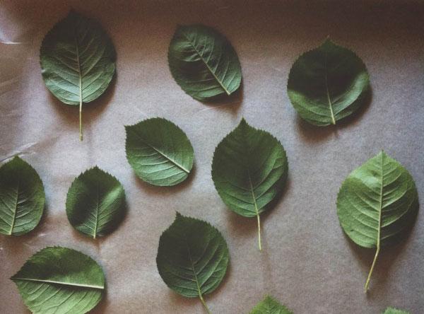 lišće2