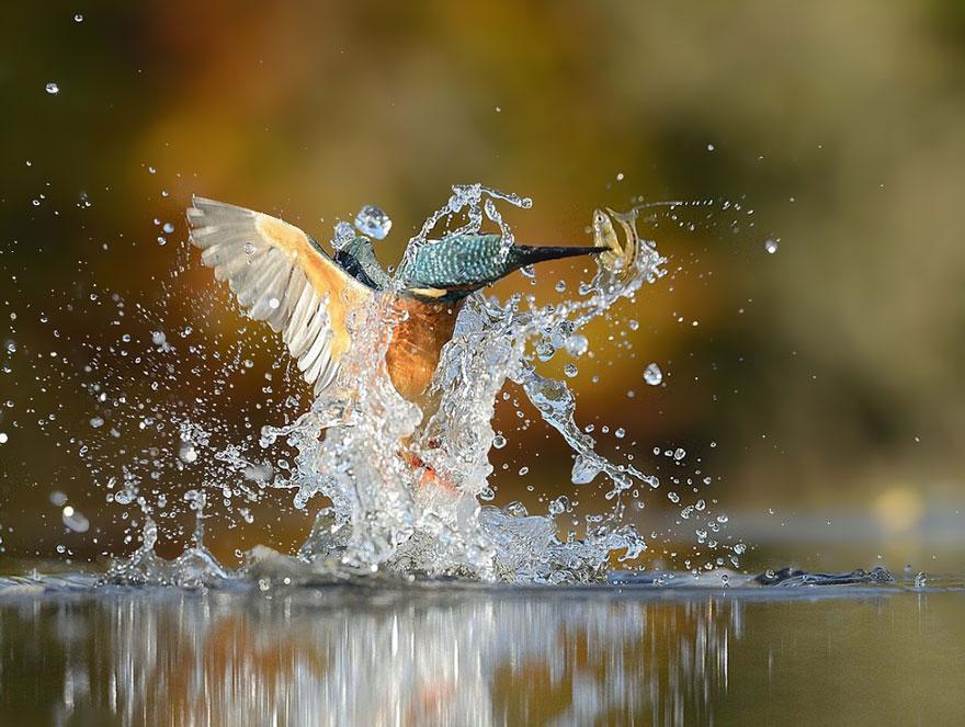 ptica2