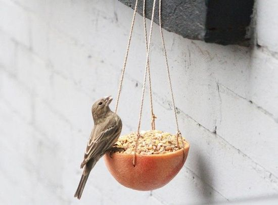 pticice