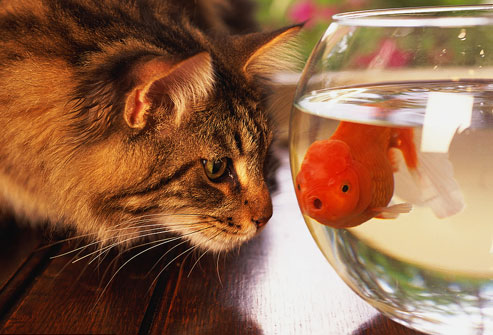 zašto je dobro imati mačku