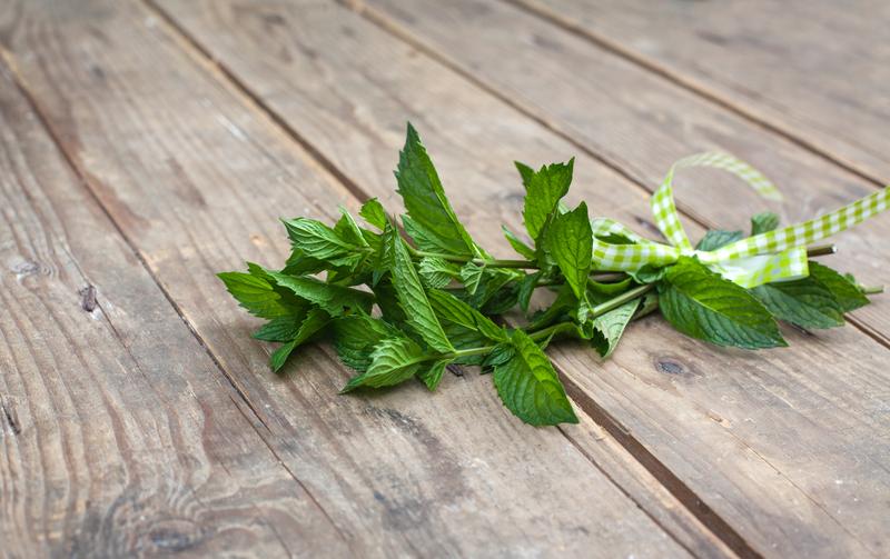 pepermint biljka
