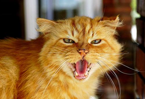 jezik mačaka i pasa