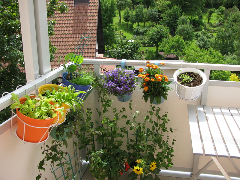 http://www.dreamstime.com/stock-image-balcony-flowers-vegetables-image23571621