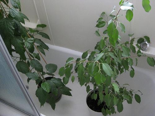 biljke u kadi tusiranje