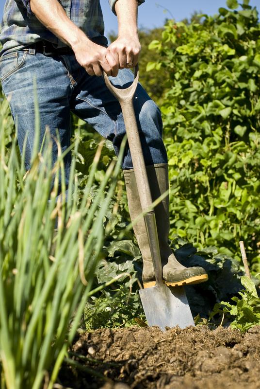 http://www.dreamstime.com/stock-photography-man-digging-vegetable-garden-image27603652