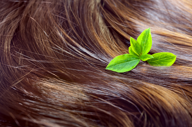 http://www.dreamstime.com/stock-photos-hair-care-concept-beautiful-shiny-hair-highlights-gree-healthy-highlighted-golden-streaks-green-leaves-closeup-shot-image33092823