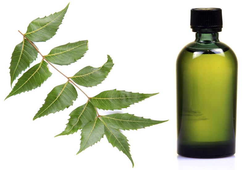 http://www.dreamstime.com/royalty-free-stock-image-neem-oil-image19502426