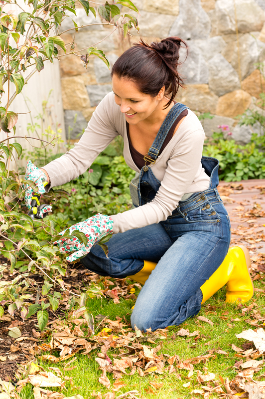 http://www.dreamstime.com/royalty-free-stock-photo-happy-woman-gardening-bush-fall-backyard-kneeling-clippers-autumn-hobby-pruning-image33531125